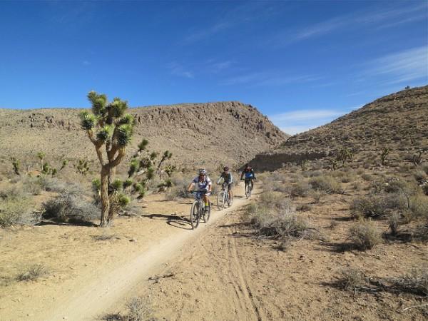 mountain biking in las vegas cottonwood valley