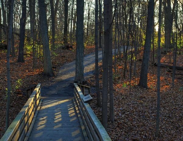tekakwitha woods 5 best day hikes near chicago