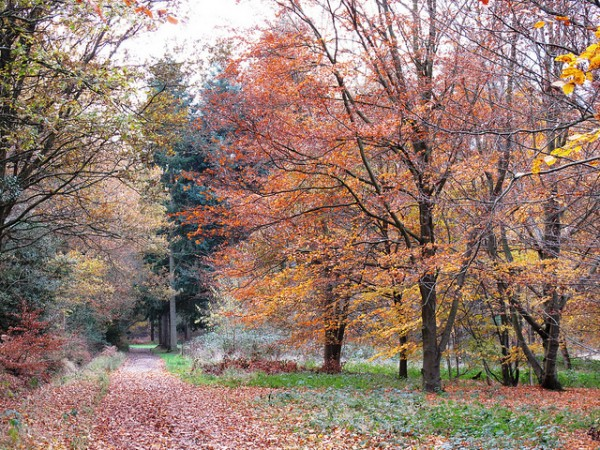 5 best day hikes near london green hurst to oxted