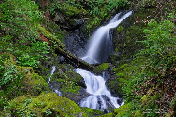 cataract creek trail 5 best day hikes near san francisco