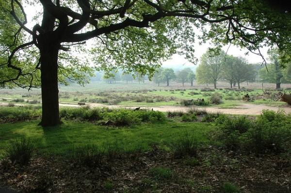 5 bet day hikes near london richmond park