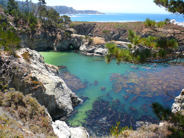point-lobos-scuba-diving