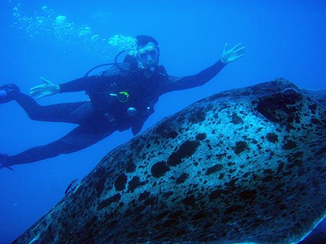 the-yongala-scuba-diving